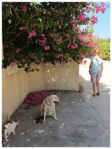 """εκπαίδευση σκύλων: Η εντολή """"μείνε"""""""